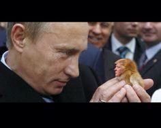 21 Best Putin images in 2016   Vladimir putin, Presidents ...