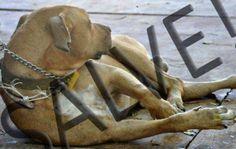 UPA veterinária será construída após cão sofrer maus tratos em Campo Grande