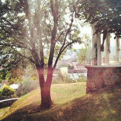 Cluj Romania, Plants, Beautiful, Instagram, Plant, Planets