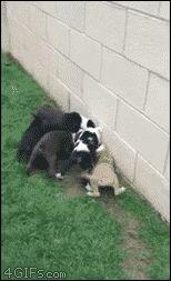 350 Ideas De Amigos Especiales Mascotas Animales Bonitos Animales Adorables