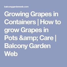 Growing Grapes in Containers | How to grow Grapes in Pots & Care | Balcony Garden Web