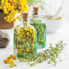 Use this guide to make your own simple, effective herbal remedies, and add medicine-making to your self-sufficiency repertoire.