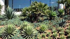 Commercial Shrub Health care Services in Santa Barbara -sbevolutionland. Landscape Maintenance, Landscaping Company, Cool Landscapes, Santa Barbara, Shrubs, Health Care, Commercial, Plants, Shrub