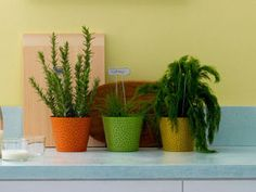 Colorful Pots That Make Your Plants Green with Envy