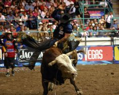 pbr | picture is not to be duplicated or copied. All rights reserved.