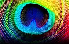 Resultado de imagen para peacock feather