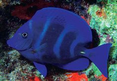 We've added beautiful Blue Tangs & 300+ other fish (yes, you read that right!) this week!