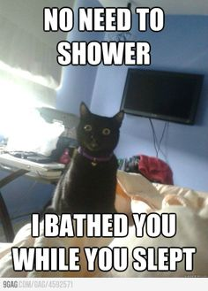 """""""Overly Attached Cat,"""" said previous pinned. """"My cat,"""" said me. Haha"""