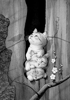 Gatos… Makoto Muramatsu Makoto Muramatsu Brilliant illustration and so I love the clear lines, the colors and the light! Art And Illustration, Animals And Pets, Cute Animals, Image Chat, Cat Drawing, Cat Love, Crazy Cats, Cat Art, Cute Wallpapers