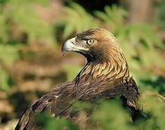 Pesquisa Como superar seu medo de aves. Vistas 72643.