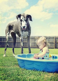Great dane and baby!  I love these dogs...