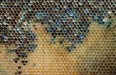Bees in northeastern France have been producing honey in shades of blue and green