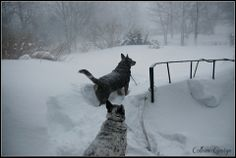 Jake and Maggie wade through snowdrifts and into the blizzard for an outdoor break. Wild weather on the North Mountain!