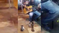 """In Disneys Zeichentrickfilm Aristocats heißt es """"Katzen brauchen furchtbar viel Musik."""" Das da etwas dran ist, beweisen die kleinen in diesem Video."""