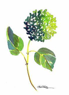 Green Hydrangea: hydrangea watercolor painting lauratrevey.etsy.com