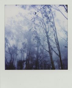 into the woods... #polaroid #photography