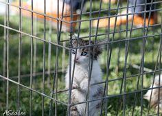 Gatito abandonado, muy despeinado en la concentración de Zarapeluda 2013