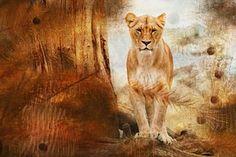 Lion, Turkis, Iso Kissa, Eläimet