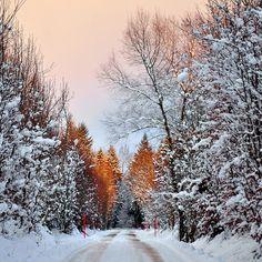 Wondering in the winter light