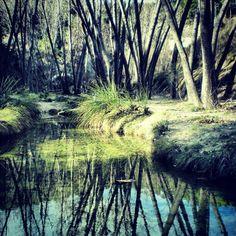 """Paraje Natural Municipal """"Racó de Sant Bonaventura-Canalons"""" Alcoi Alicante, Trekking, Natural, Travel, Painting, Lakes, Graveyards, Peace, Places"""