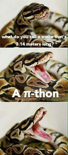 Says a laughing Boa :> Cute Animals, Funny Animals, Funny Images, Funny Photos, Funny Cute, The Funny, Snaks, Serpent, Funny Jokes