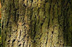 écorce d'arbre - Lilo