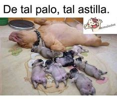 Funny dog mommy sleeping with puppies. Funny Animal Memes, Cute Funny Animals, Funny Animal Pictures, Cute Baby Animals, Funny Cute, Funny Dogs, Funny Memes, Memes Humor, Cute Puppies