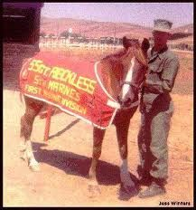 Sgt. Reckless... Camp Pendleton, California...