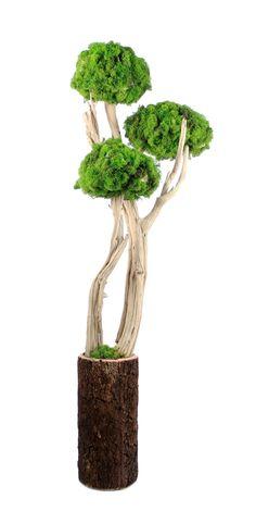 Plants are a sign of life, vitality and freshness. Moss Wall Art, Moss Art, Modern Flower Arrangements, Orchid Arrangements, Moss Graffiti, Vertical Succulent Gardens, Moss Garden, Arte Floral, Diy Planters