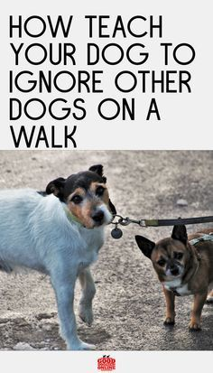 Imagine this: You and your doggo are walking along the sidewalk in peace and relaxed. Suddenly, another individual is coming your way also walking with their doggo. Your buddy saw his buddy and… More