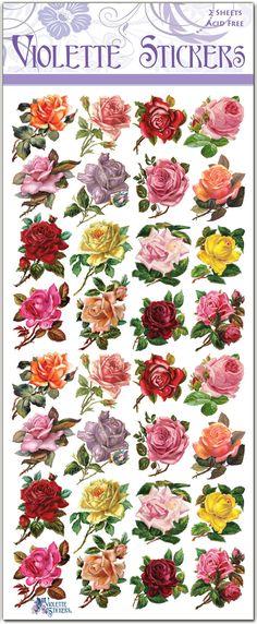 C12-Mini-Roses-Updated