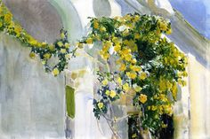 yellow rose bush / sorolla