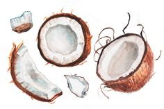 Watercolor coconut illustration by lenavetka87 on @creativemarket
