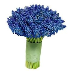 bouquet of hyacinth | The Miscellaneous Bride: Grape Hyacinth Bouquets. That's all she wrote ...