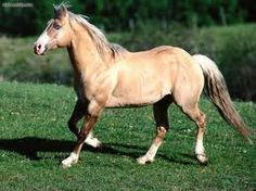 Dream horse would be the Quarter Horse...