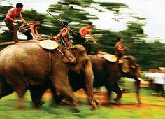 course d elephants a tay nguyen