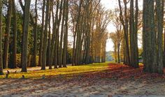 Fall colors in Versailles gardens, a huge area full of trails for a great run