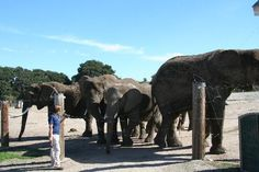 Want to get up close and personal with an Elephant? Then you must take the kids to Monterey's own Zoo... WILD THINGS!
