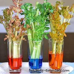 Toddler Science: The Celery Experiment and How Plants Absorb Water from their Roots