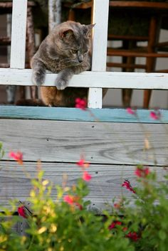 Spec, a resident barn kitty at Murski Homestead Bed and Breakfast - Brenham, Texas