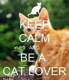 Keep Calm And Be A Cat Lover // inspiring quotes // cat quotes I Love Cats, Crazy Cats, Cute Cats, Funny Cats, Cat Love Quotes, Wolf Quotes, Keep Calm Pictures, Calming Cat, Keep Calm Signs