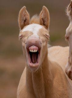 Baby Teeth by Kent Keller - Wild colt - Great Basin Desert, Utah