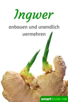 Superknolle Ingwer: Nicht kaufen, sondern ganz einfach selbst vermehren Ginger is healthy and versatile. Instead of buying expensive new tubers again, you can also easily install and care for them yourself. Little Gardens, Small Gardens, Indoor Garden, Outdoor Gardens, Super Bubbles, Paint Your House, Patio Plants, Growing Vegetables, Plant Decor