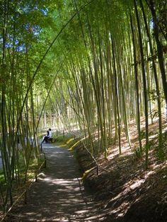 Hakone Gardens. This hidden gem in Saratoga, CA is amazing. Hope to make it back one day.