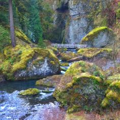 Wahclella falls trail. I love the pacific northwest. Photo by Lacey Schwegler