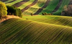 Image result for Moravian Fields, Τσεχία