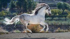 Le cheval trotte dans la tête du cavalier et galope dans son coeur.