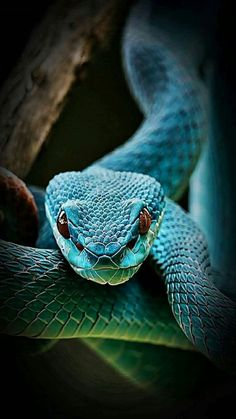 {{{Look into my eyes)}} – Animal Planet Pretty Snakes, Cool Snakes, Colorful Snakes, Beautiful Snakes, Animals Beautiful, Les Reptiles, Cute Reptiles, Reptiles And Amphibians, Prey Animals