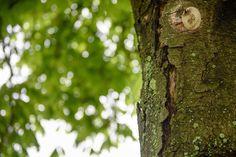Bild zu Baum