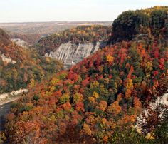 Watching the leaves change (Letchworth State Park)
